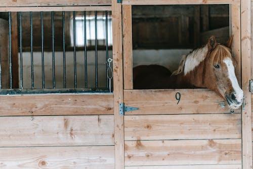 at, Çiftlik hayvanı, çiftlik hayvanları içeren Ücretsiz stok fotoğraf