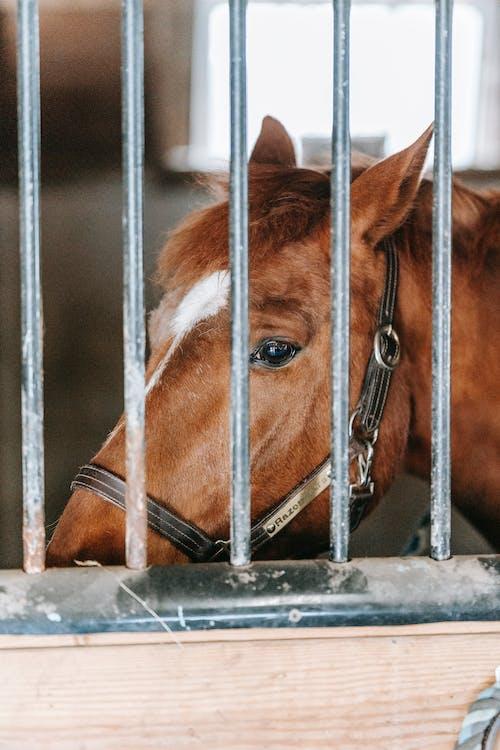 Free stock photo of animal, barn, cage