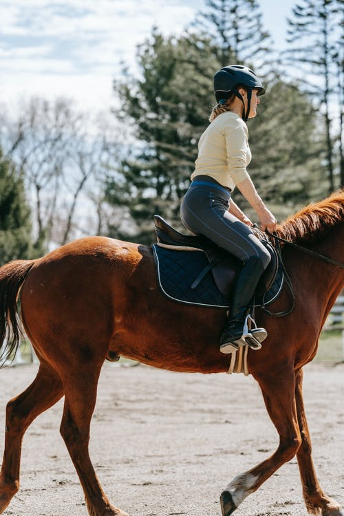 Free stock photo of action energy, adult, bridle