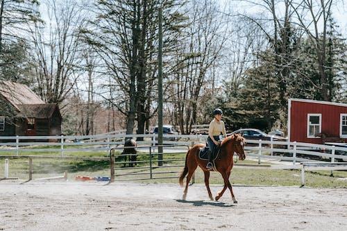 2 Men Riding Horse on Field