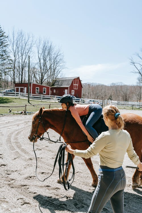 Free stock photo of adult, cavalry, equestrian