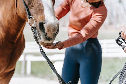Free stock photo of action energy, cavalry, fun