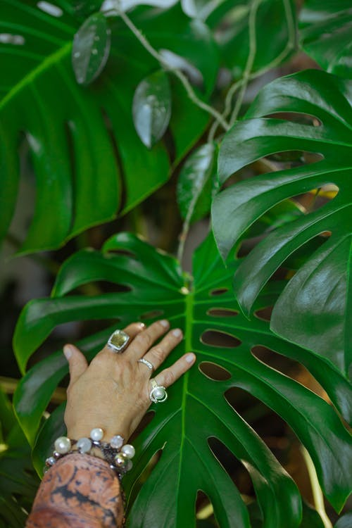 Photo Of Person Touching A Plant
