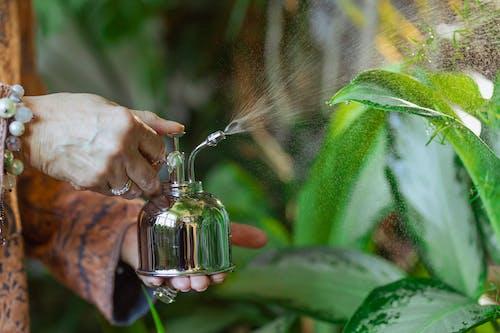 alan derinliği, bahçe bakımı, Bahçıvanlık içeren Ücretsiz stok fotoğraf