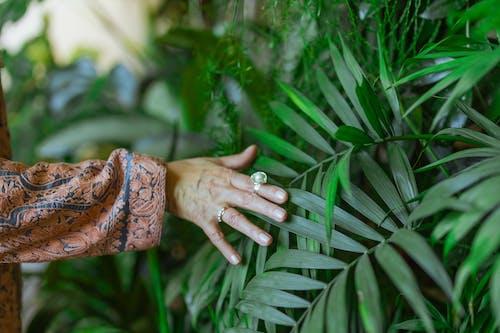 나뭇잎, 만지는, 성장의 무료 스톡 사진