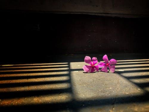 Free stock photo of beautiful, beautiful flower, beautiful flowers
