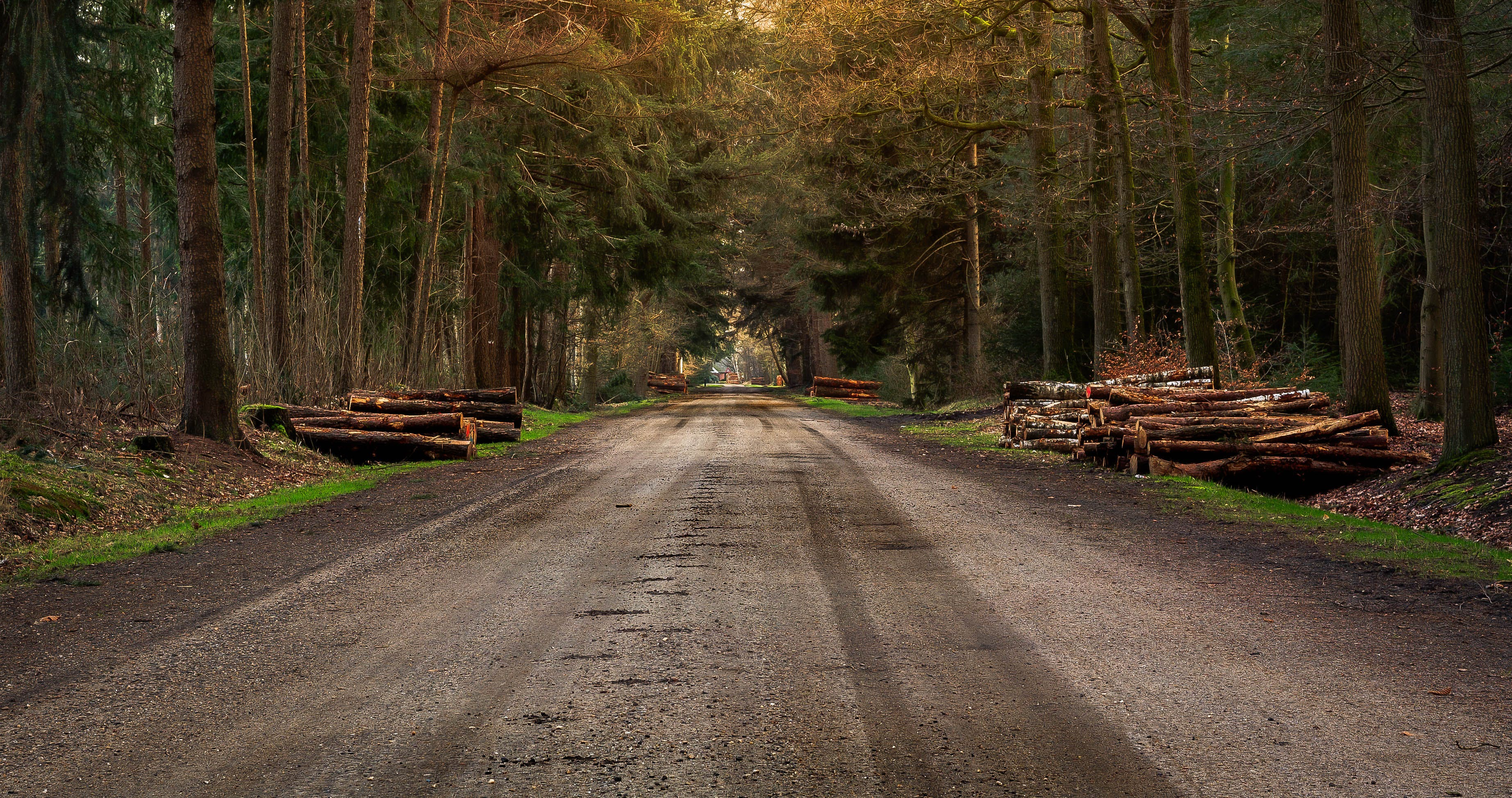 Free stock photo of bomen, bos, dirtroad, forest