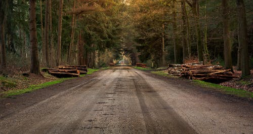 Free stock photo of bomen, bos, dirtroad
