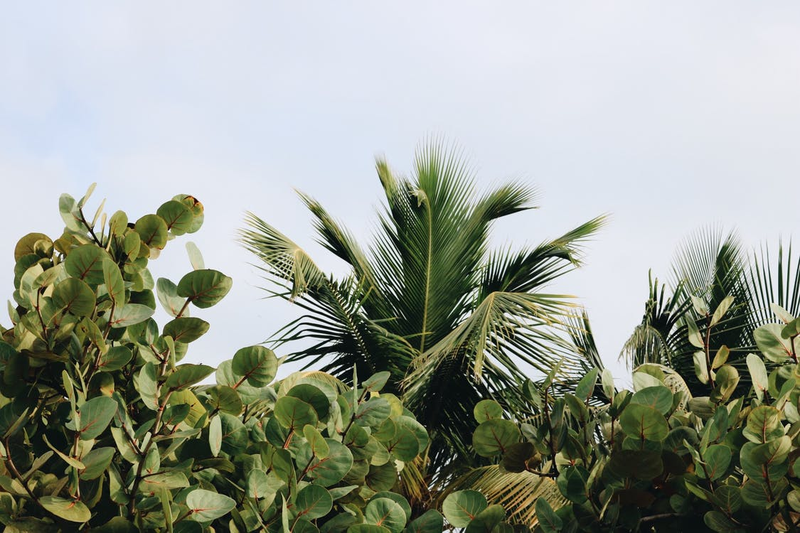 árvores, aumento, botânico