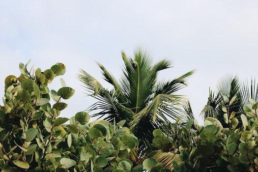 Kostenloses Stock Foto zu sommer, sonne, garten, bäume