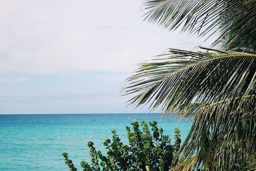 Ilmainen kuvapankkikuva tunnisteilla aurinko, hiekka, hiekkaranta, kääpiöpalmu