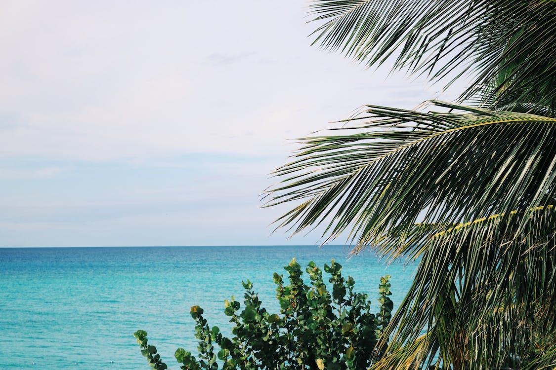 arbres, bleu, bord de mer