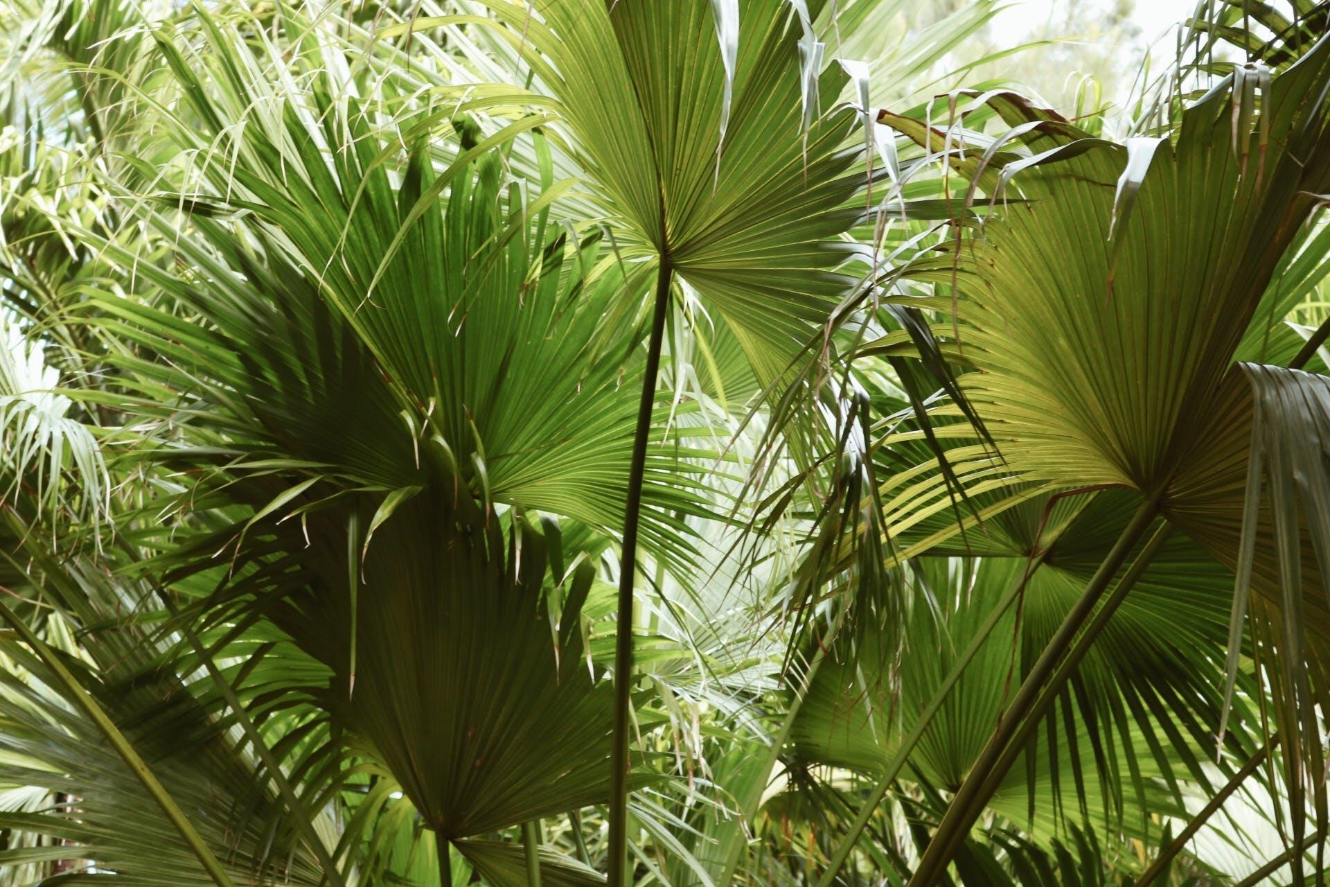 Green Fan Leaf Plant