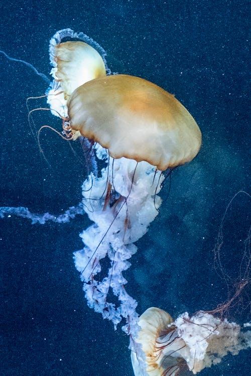 Close-Up Shot of Nettle Jellyfish Underwater