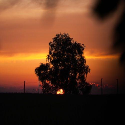 ağaç üstleri içeren Ücretsiz stok fotoğraf