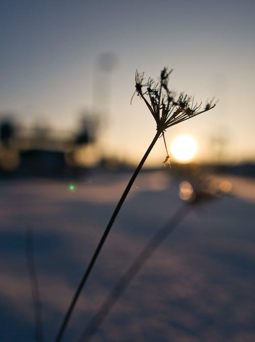 altın rengi Güneş, bokeh, kar içeren Ücretsiz stok fotoğraf
