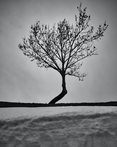 ağaç, analog, basitçe içeren Ücretsiz stok fotoğraf