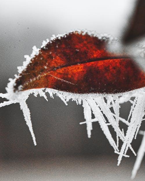 analog, buz, kırmızı içeren Ücretsiz stok fotoğraf