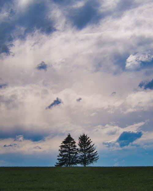 ağaçlar, bulutlar, gökyüzü içeren Ücretsiz stok fotoğraf