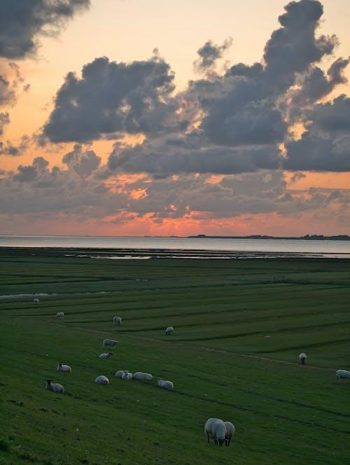 açık hava, akşam, arazi içeren Ücretsiz stok fotoğraf