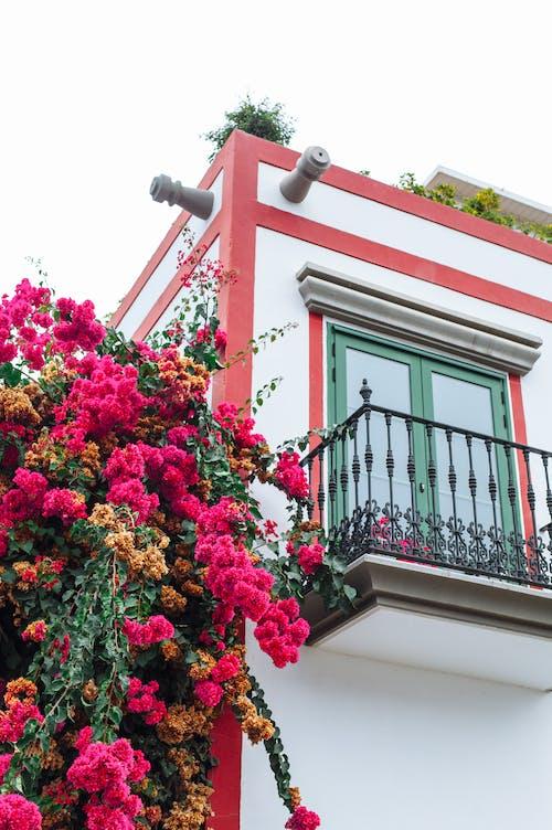 Free stock photo of architecture, balcony, bright