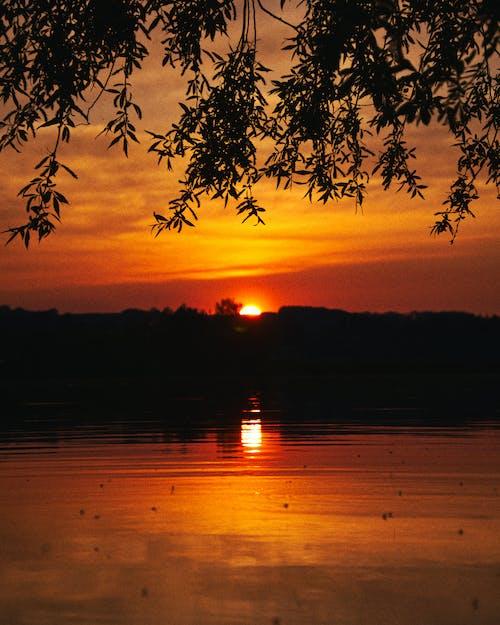 ağaç, akşam, akşam karanlığı içeren Ücretsiz stok fotoğraf