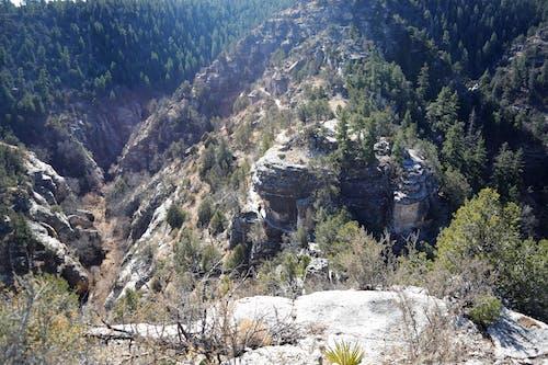 Ảnh lưu trữ miễn phí về cây, lạch óc chó, núi, thung lũng