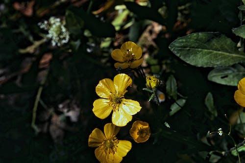 Foto profissional grátis de amarelo dourado, beleza, buquê, cores