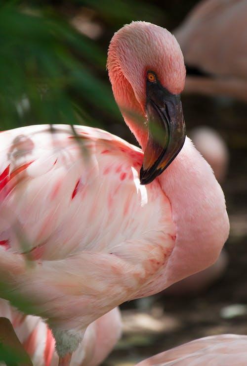 Gratis stockfoto met aviaire, beest, blurry achtergrond, buiten