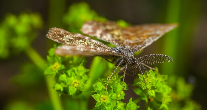 Free stock photo of insect, macro, butterfly