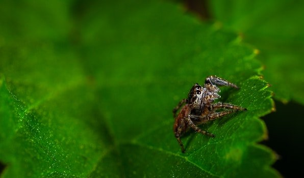 Macro Photography of Spider On Leaf
