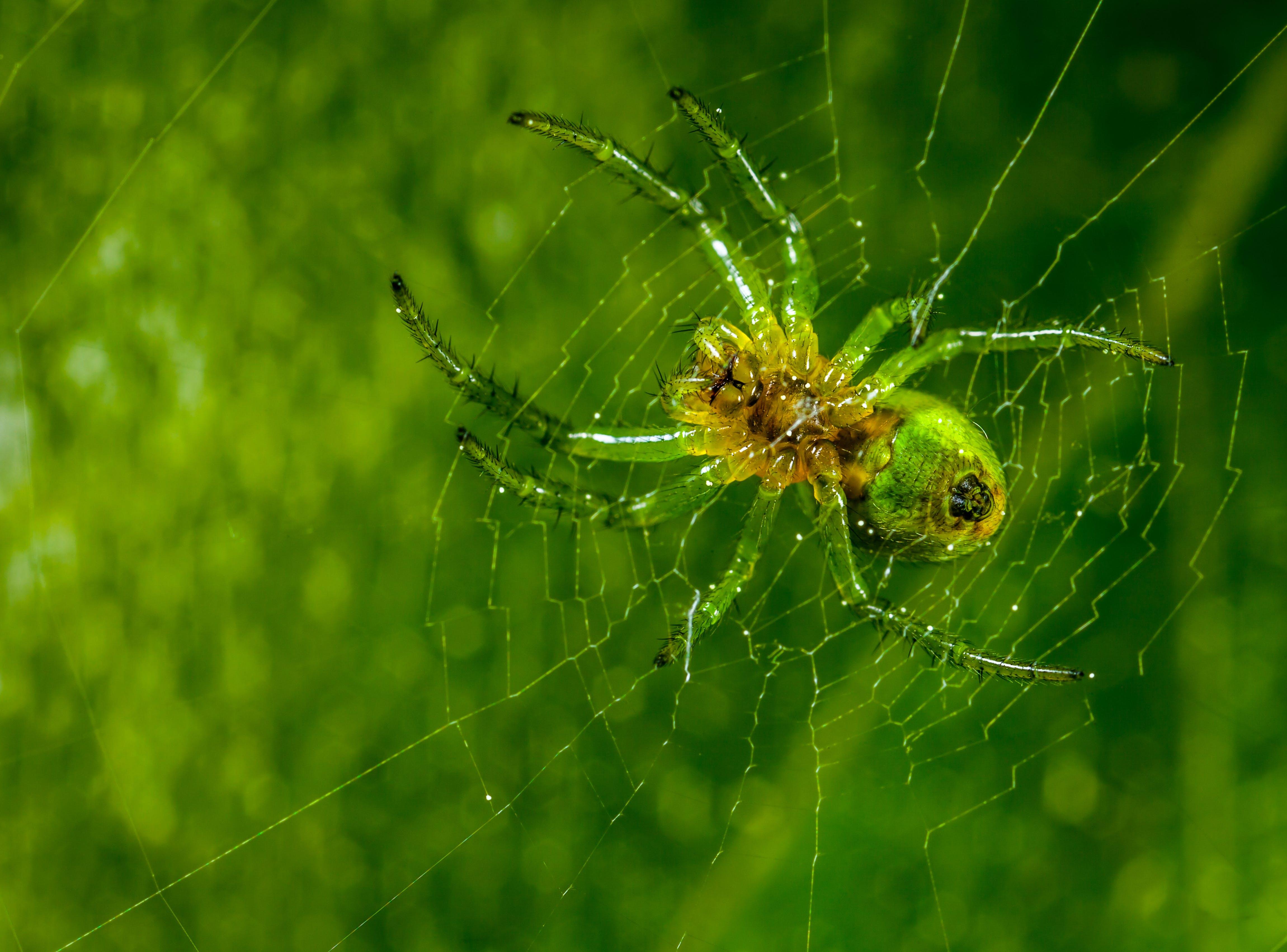 Free stock photo of macro, spider, web, arachnid