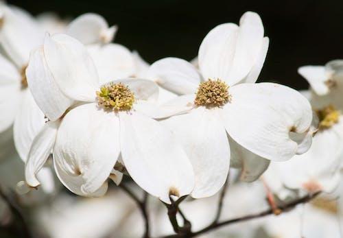 Gratis stockfoto met bloem, bloesem, prieel