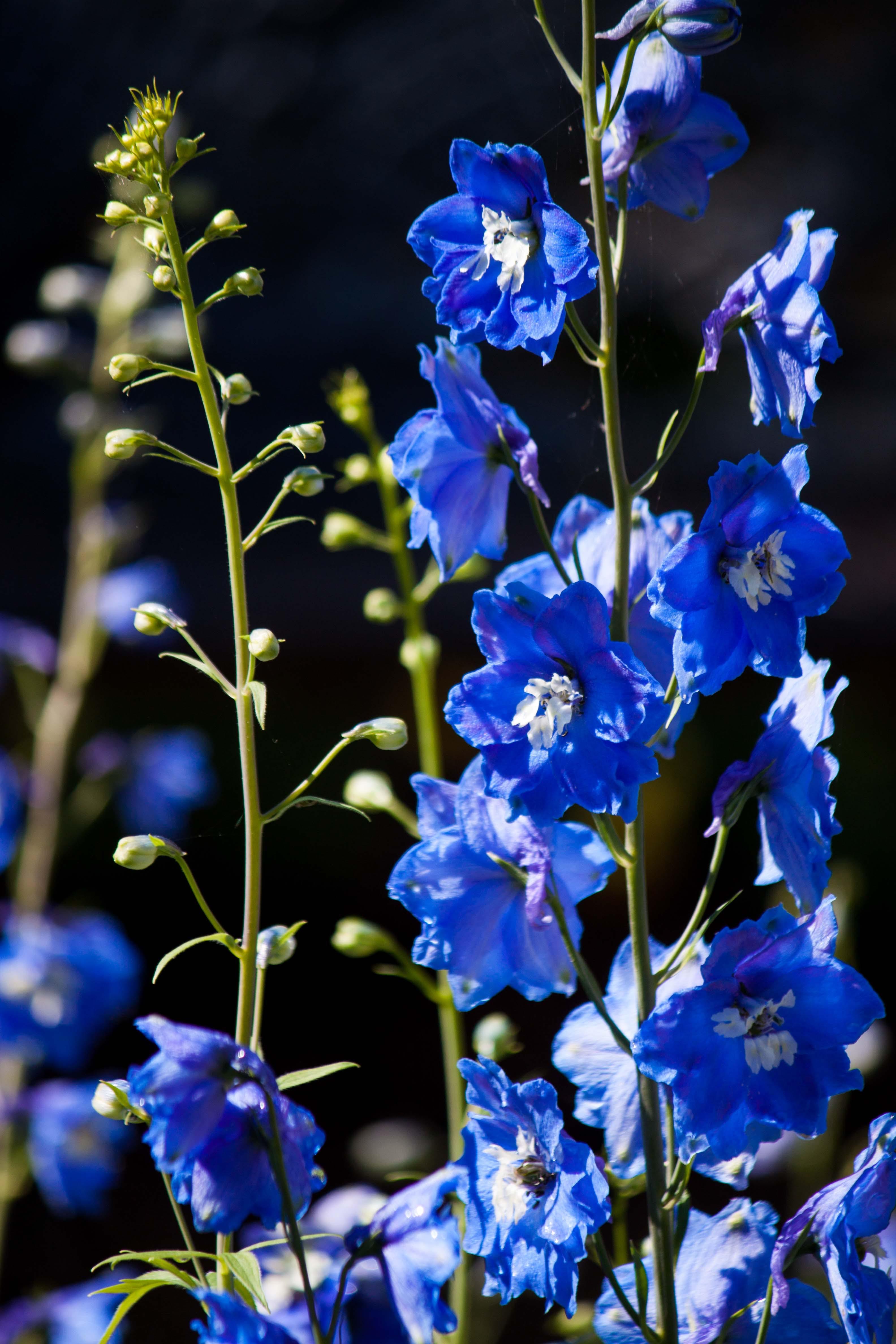 Free stock photo of flower, garden, nature, spring