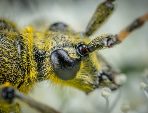 คลังภาพถ่ายฟรี ของ ตา, แมลง, แมโคร