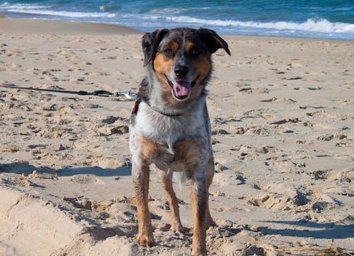 Gratis stockfoto met buitenste banken, hond, oceaan, pupper