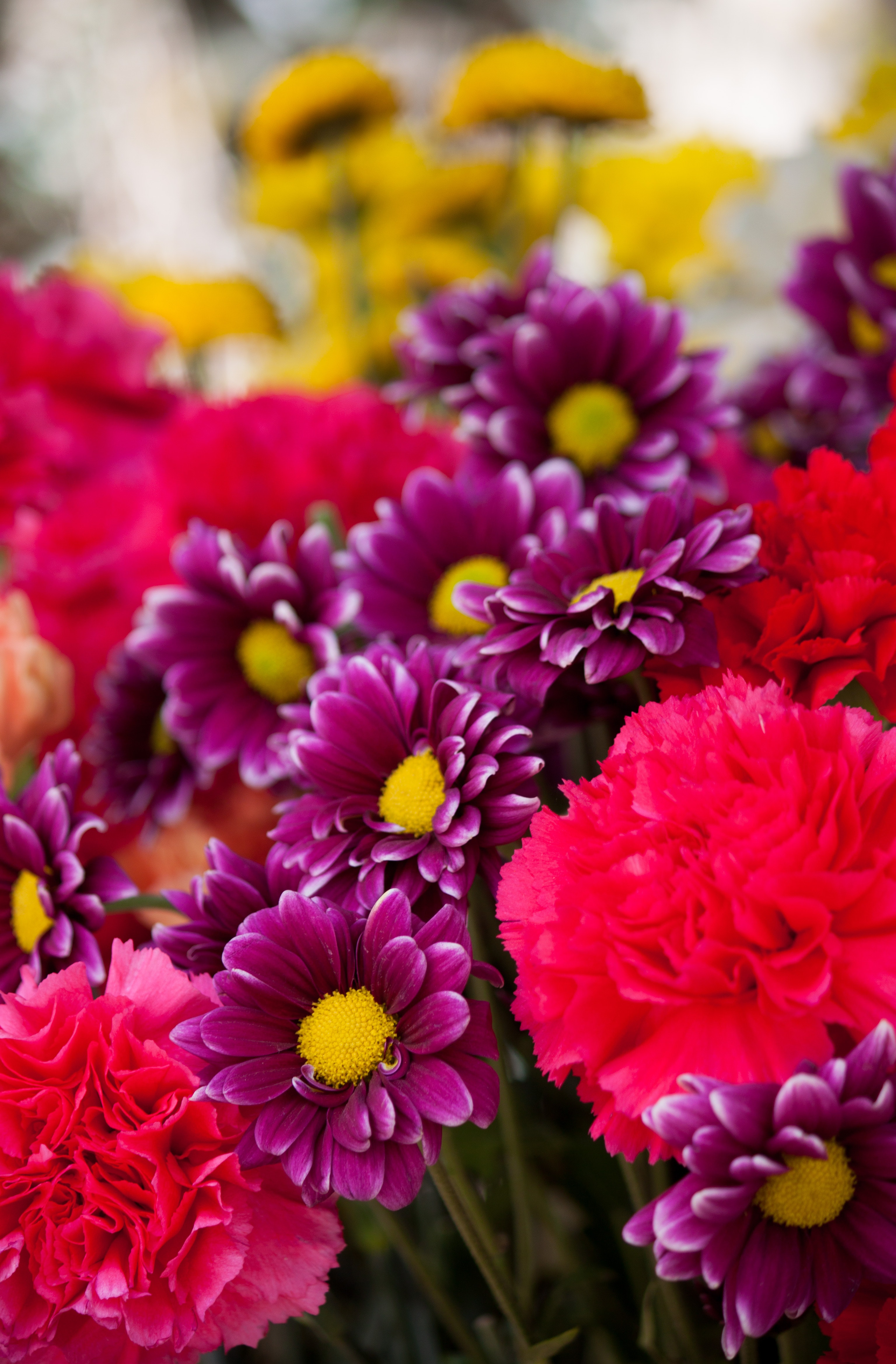 Bokeh Photo Of Purple Pink And Yellow Flowers Free Stock Photo