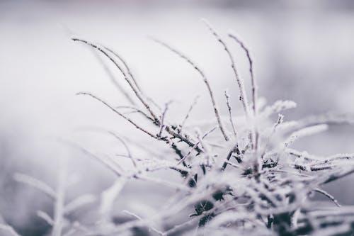 Ảnh lưu trữ miễn phí về ánh sáng ban ngày, băng, có tuyết rơi, danh lam thắng cảnh
