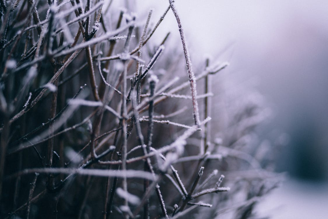 Macro Photography of Branch With Snow
