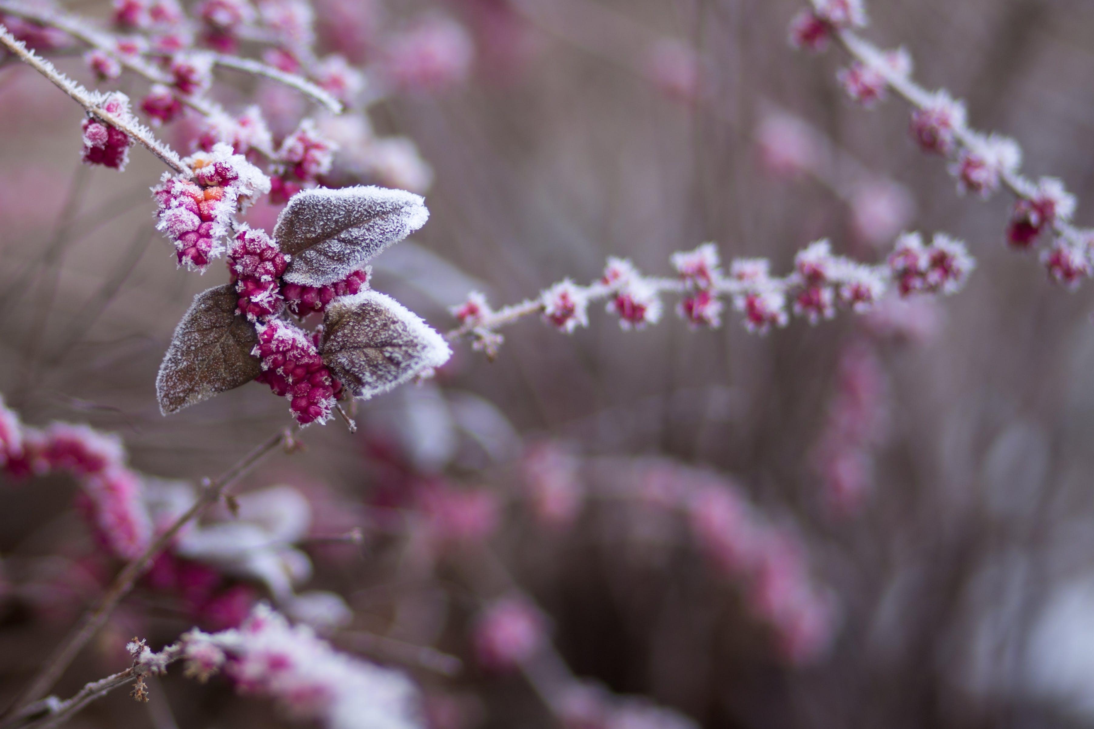 Gratis arkivbilde med årstid, bær, farger, frosset