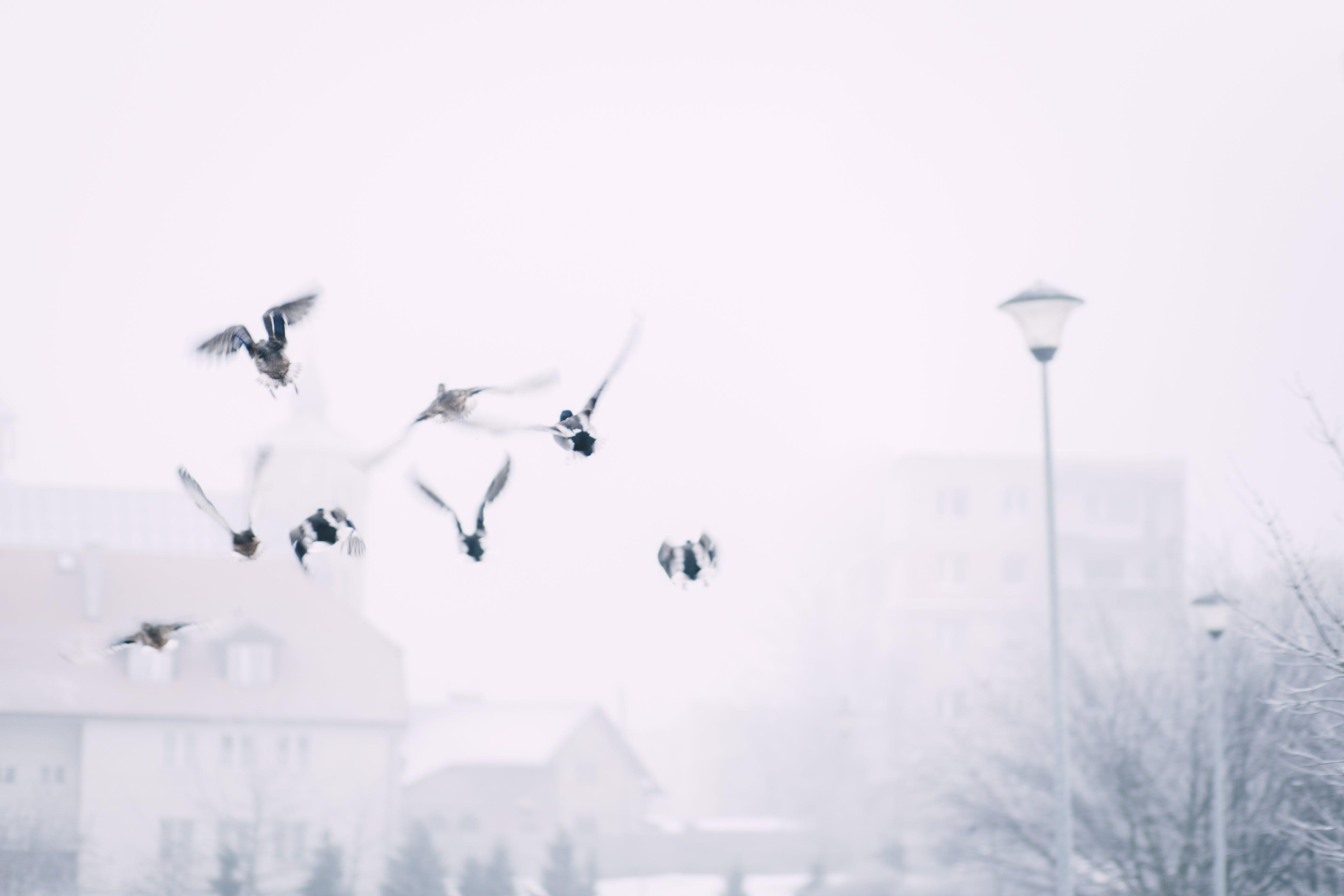 Flock of Flying Birds Above Street