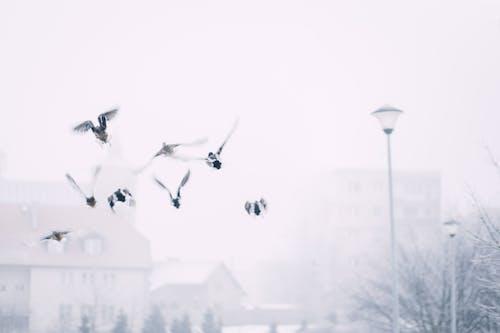 Безкоштовне стокове фото на тему «вітер, дія, зима, крила»