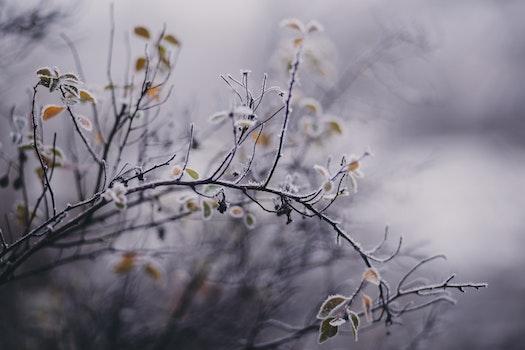 Tilt Shift Focus Photography of White Petaled Flower