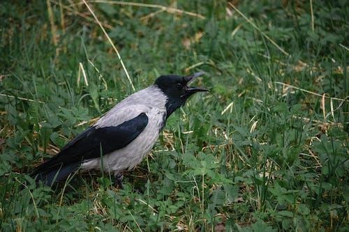 Fotos de stock gratuitas de aviar, campo, césped