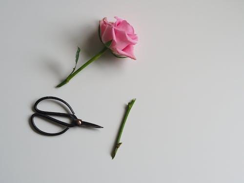 Gratis arkivbilde med aroma, aromatisk, arrangement
