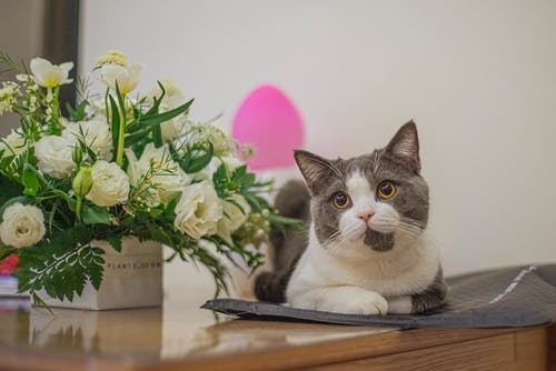 Základová fotografie zdarma na téma hezký, kočka, koťátko