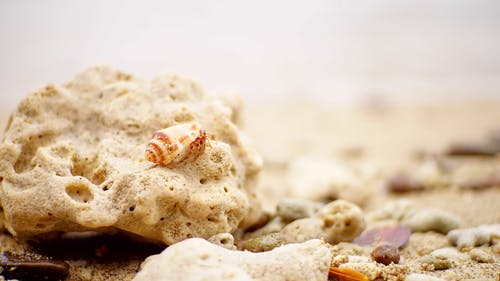 Ảnh lưu trữ miễn phí về cát, mơ hồ, nền mờ, vỏ sò biển