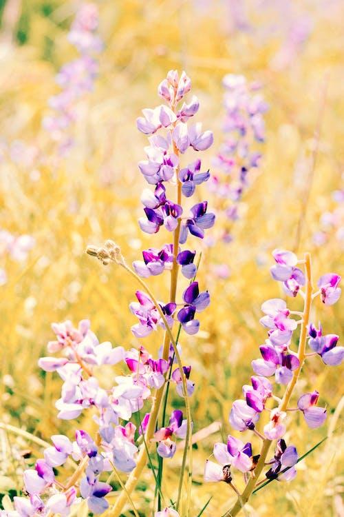 Darmowe zdjęcie z galerii z flora, jasny, kolor