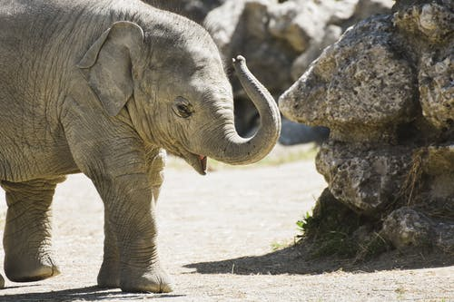 Free stock photo of animal, barbaric, big