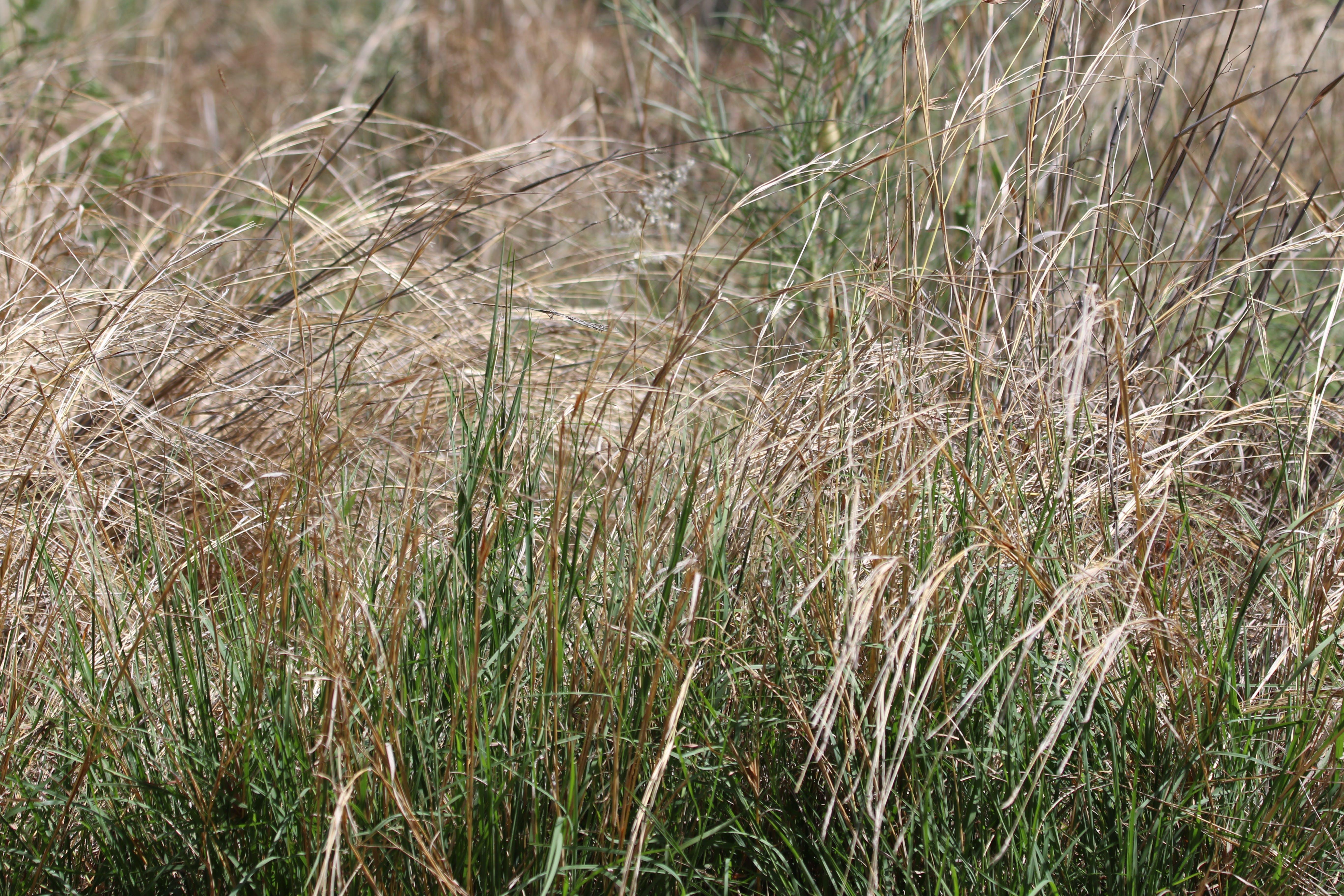 Focus Photography of Green Grass Field